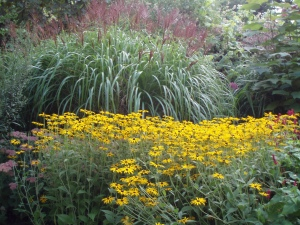 Miscanthus and Rudbeckias Knoll Gdns 2010